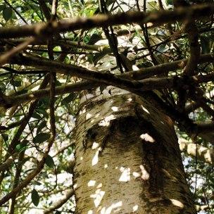 Foto einer Birke