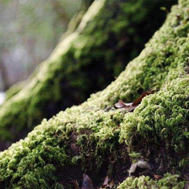 Nachaufnahme im Wald